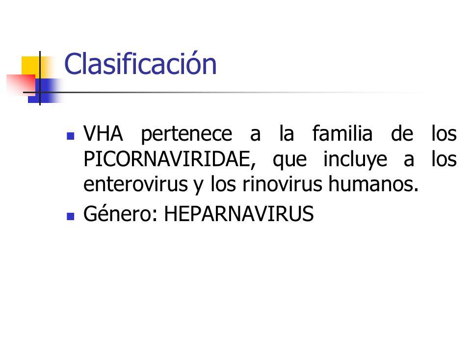 Clasificación VHA pertenece a la familia de los PICORNAVIRIDAE, que incluye a los enterovirus y los rinovirus humanos.