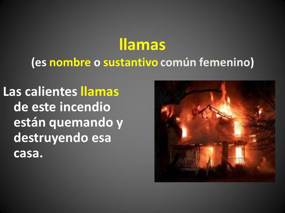 llamas (es nombre o sustantivo común femenino)