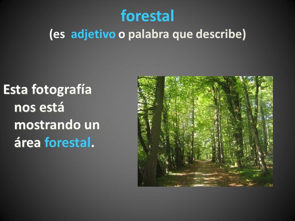 forestal (es adjetivo o palabra que describe)