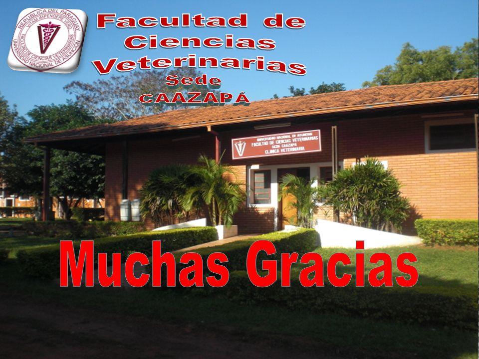 Facultad de Ciencias Veterinarias Sede CAAZAPÁ Muchas Gracias