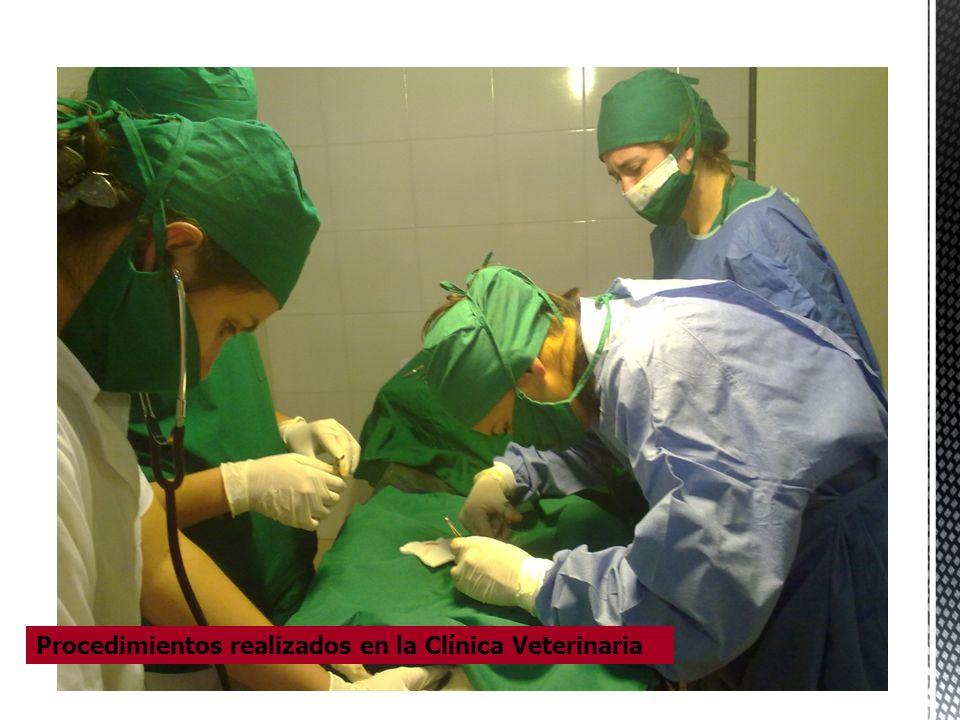 Procedimientos realizados en la Clínica Veterinaria