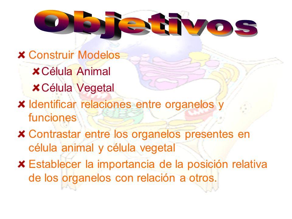 Objetivos Construir Modelos. Célula Animal. Célula Vegetal. Identificar relaciones entre organelos y funciones.