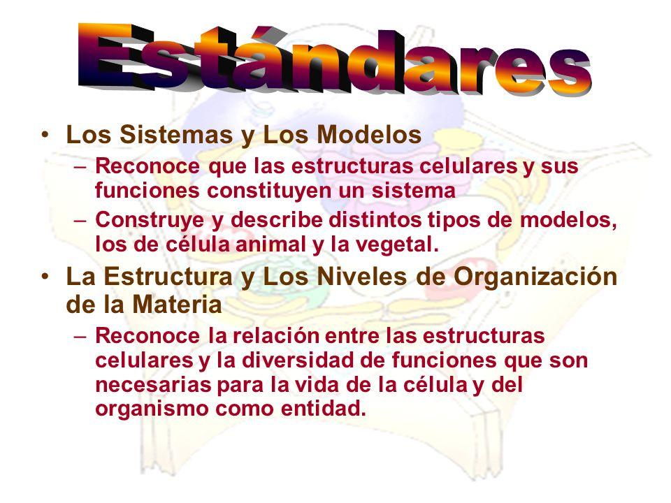 Los Sistemas y Los Modelos