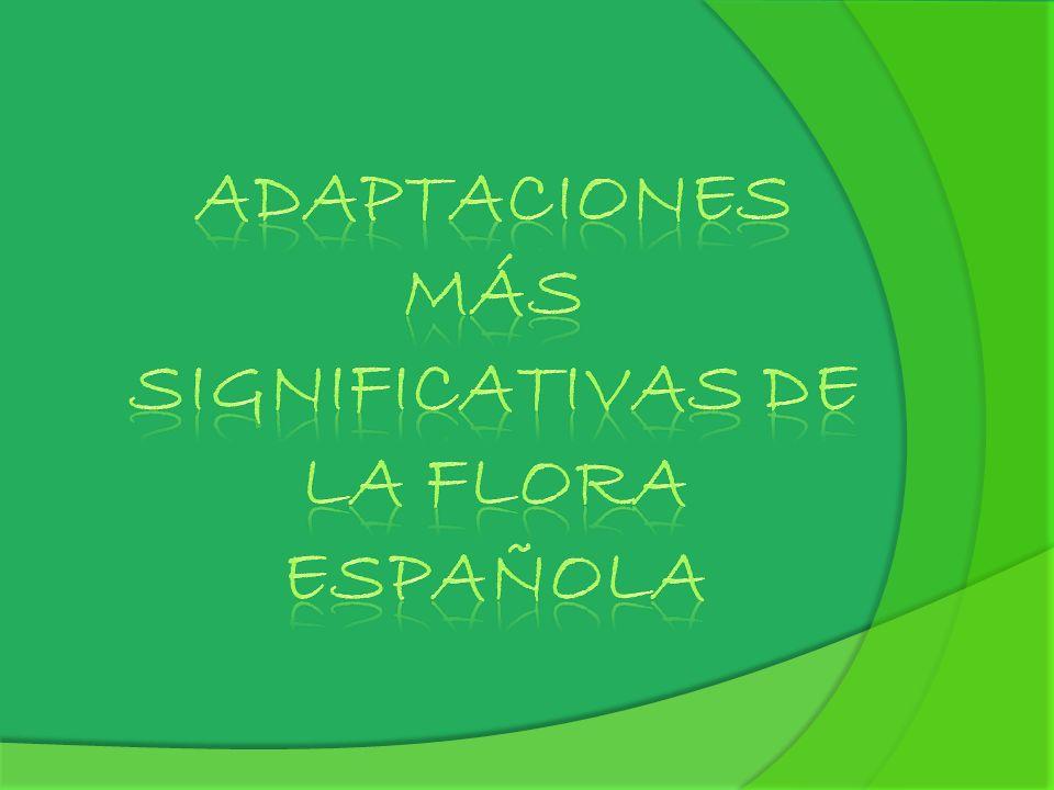 Adaptaciones más significativas de la flora española