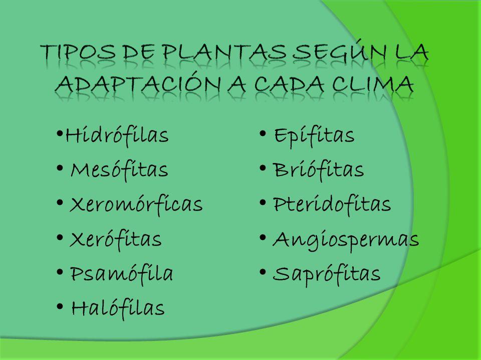 Tipos de plantas según la adaptación a cada clima