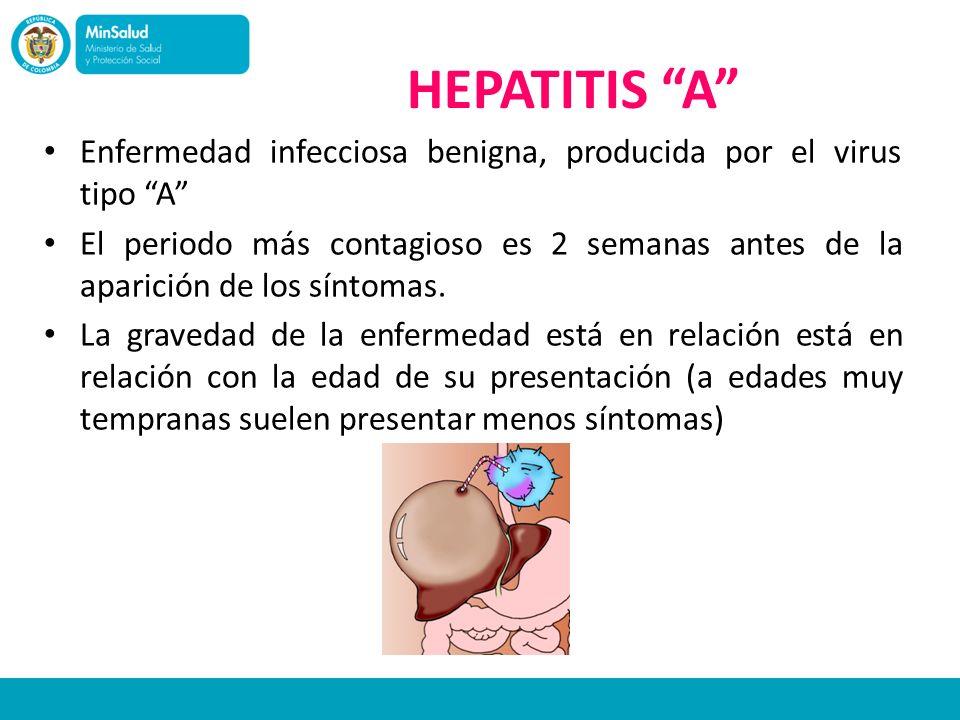 HEPATITIS A Enfermedad infecciosa benigna, producida por el virus tipo A