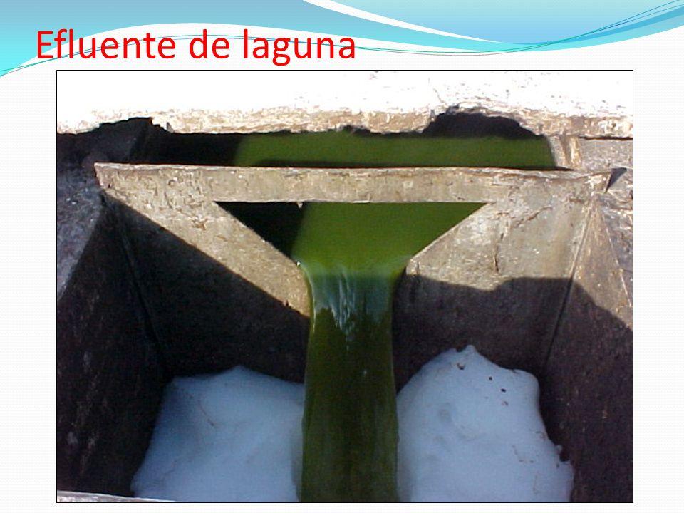 Efluente de laguna