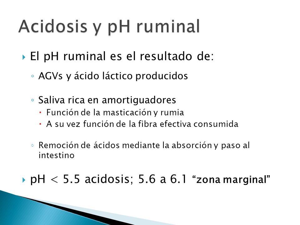 Acidosis y pH ruminal El pH ruminal es el resultado de: