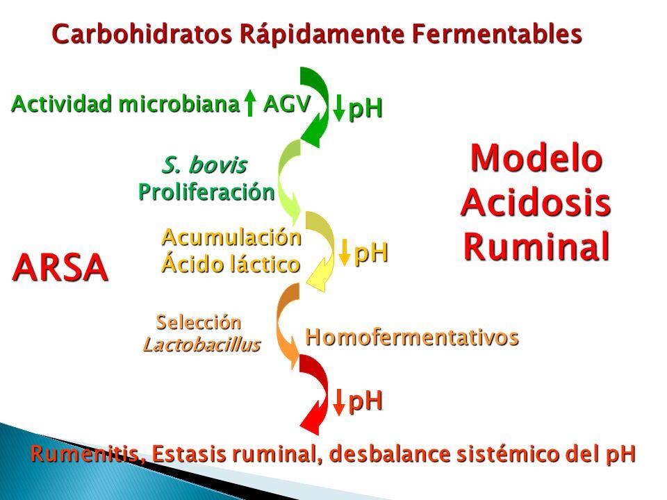 Rumenitis, Estasis ruminal, desbalance sistémico del pH