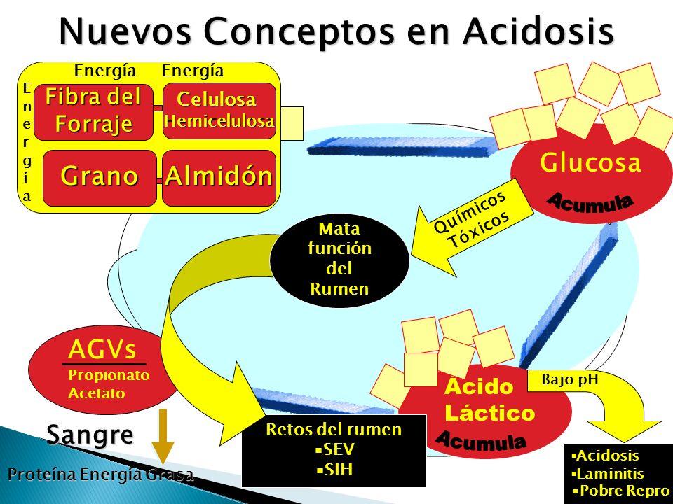 Nuevos Conceptos en Acidosis
