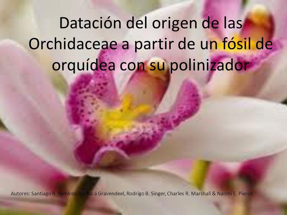 Datación del origen de las Orchidaceae a partir de un fósil de orquídea con su polinizador