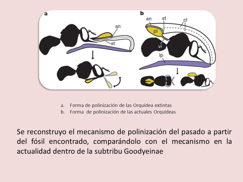 Forma de polinización de las Orquídea extintas