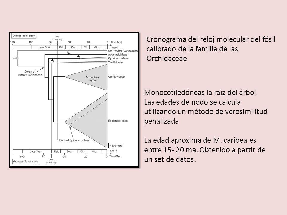 Cronograma del reloj molecular del fósil calibrado de la familia de las Orchidaceae