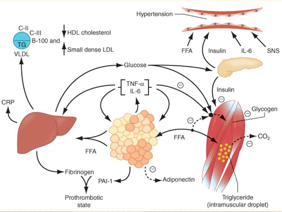 AGL se liberan en abundancia de la masa de tejido adiposo, y causan incremento en la producción de glucosa y TG y la secreción de VLDLs
