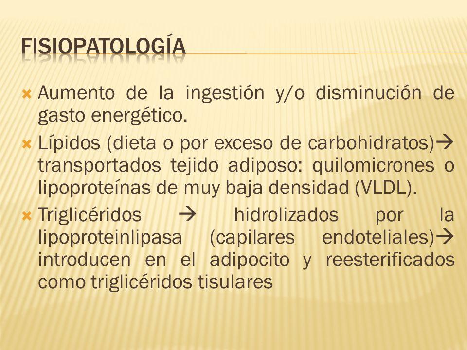 Fisiopatología Aumento de la ingestión y/o disminución de gasto energético.