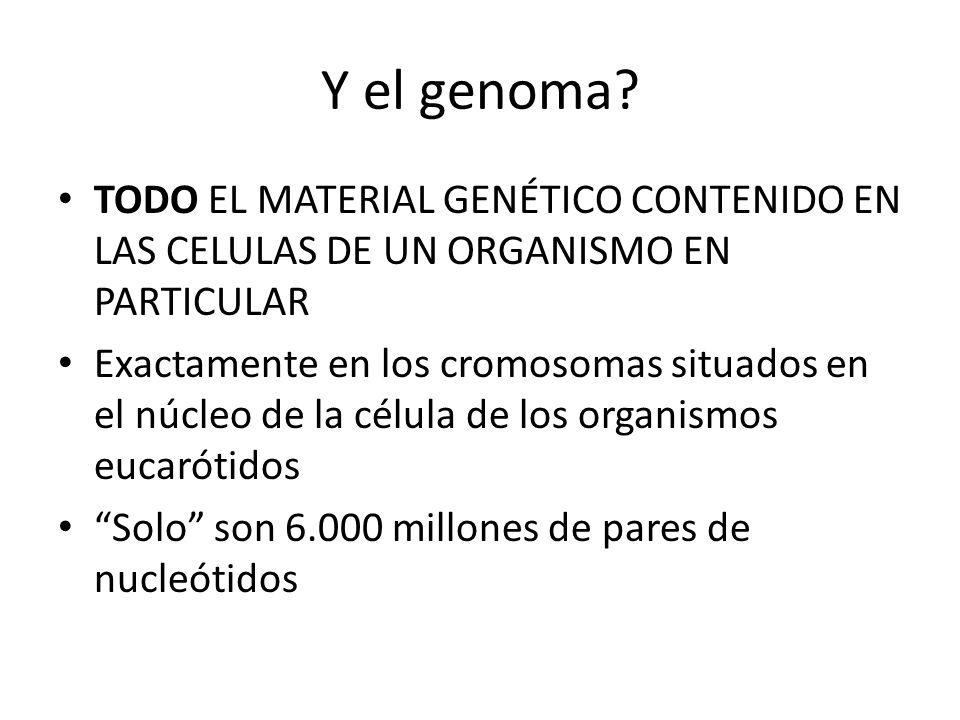 Y el genoma TODO EL MATERIAL GENÉTICO CONTENIDO EN LAS CELULAS DE UN ORGANISMO EN PARTICULAR.