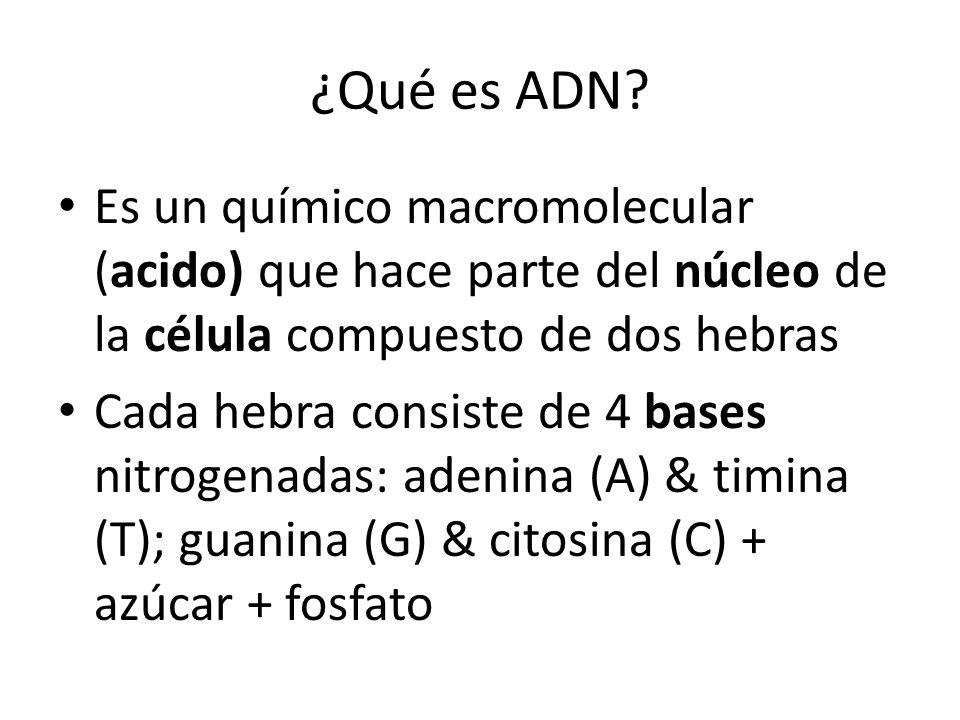 ¿Qué es ADN Es un químico macromolecular (acido) que hace parte del núcleo de la célula compuesto de dos hebras.