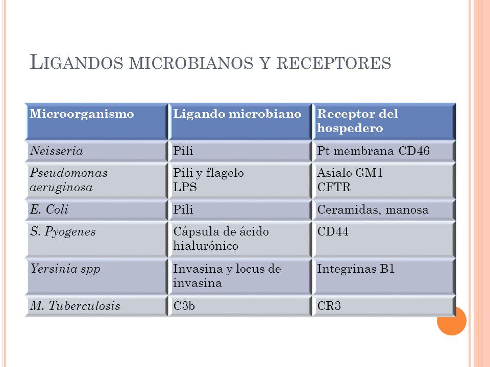 Ligandos microbianos y receptores