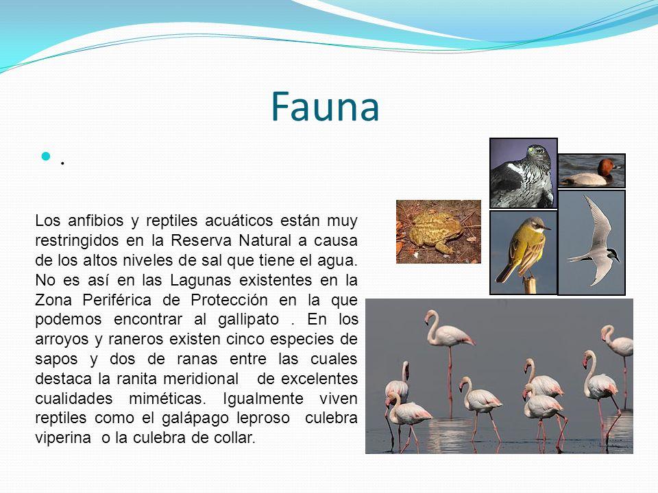 Fauna .