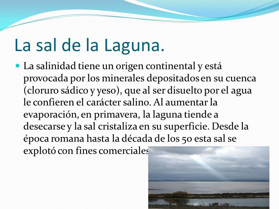 La sal de la Laguna.