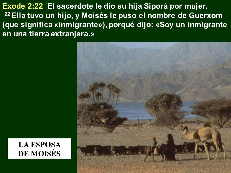 Èxode 2:22 El sacerdote le dio su hija Siporà por mujer.