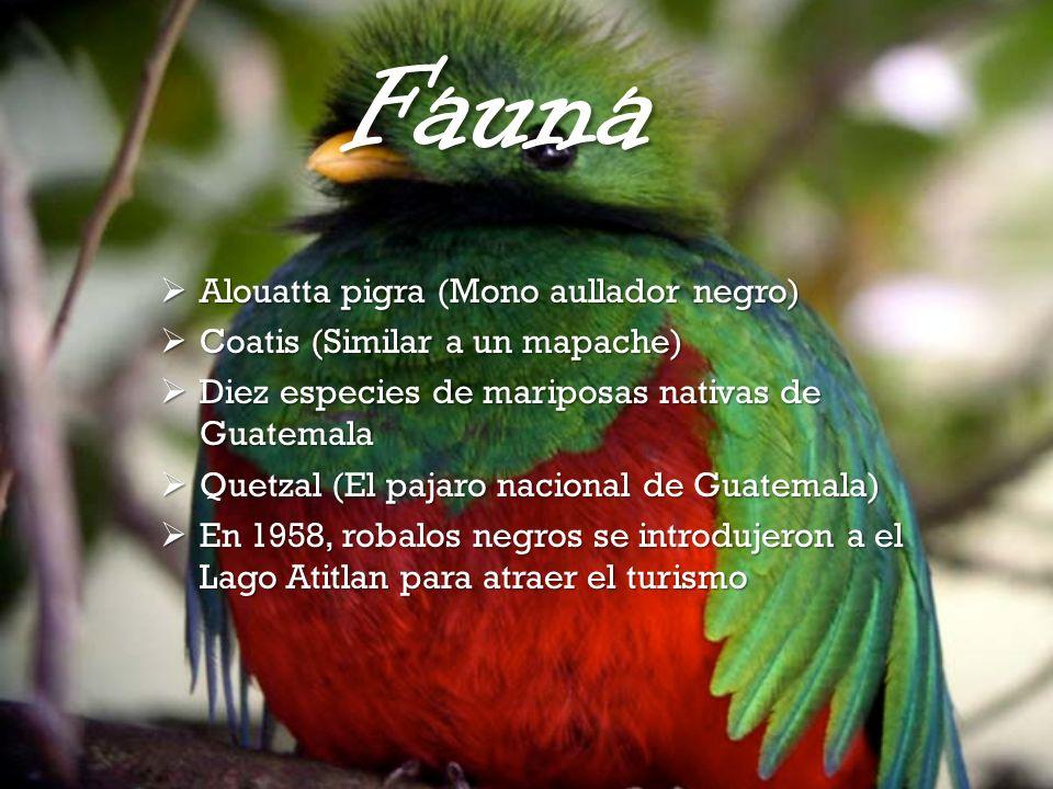 Fauna Alouatta pigra (Mono aullador negro)