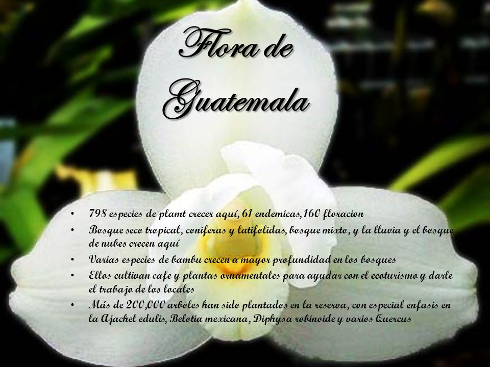 Flora de Guatemala 798 especies de plamt crecer aquí, 61 endemicas, 160 floracion.