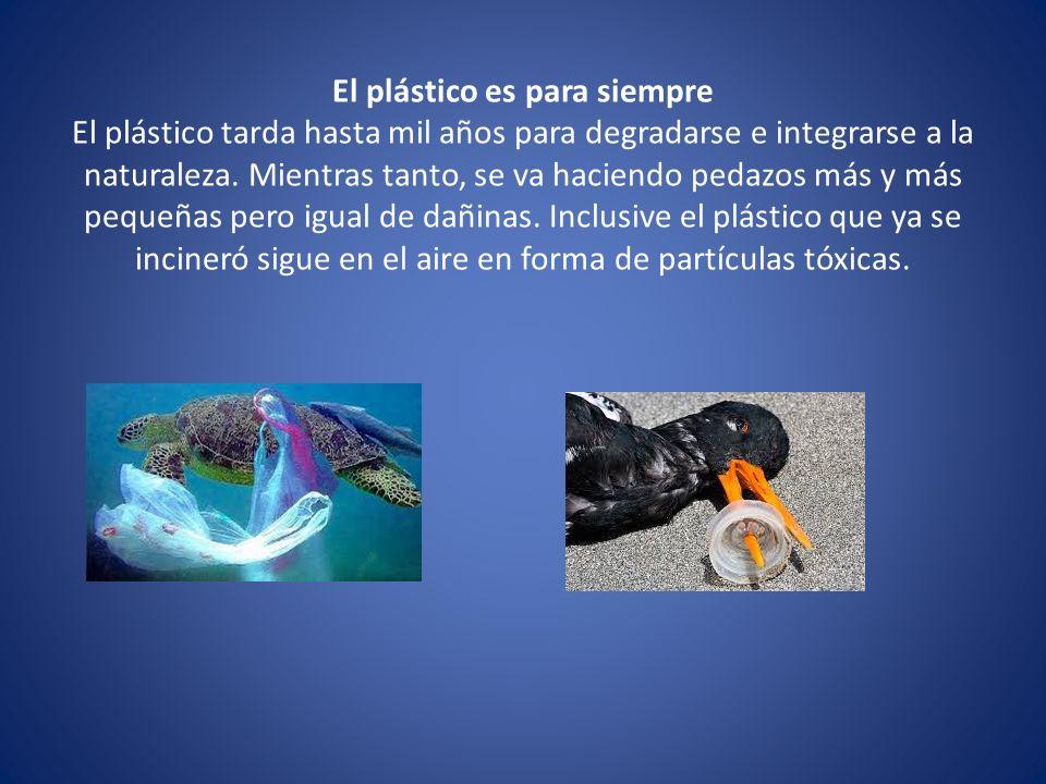 El plástico es para siempre El plástico tarda hasta mil años para degradarse e integrarse a la naturaleza.