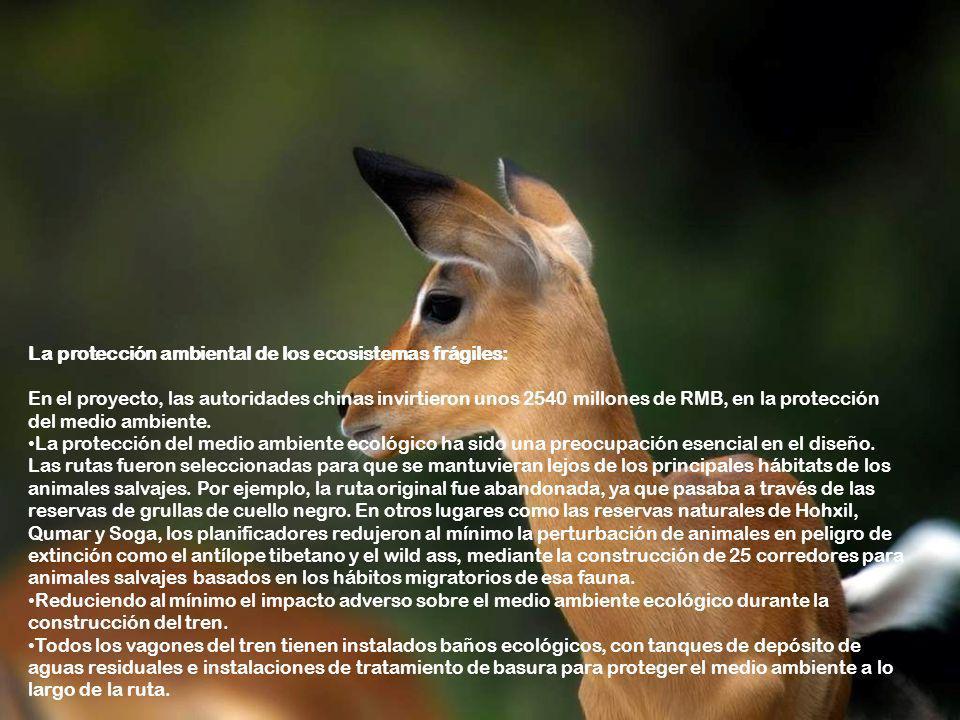 La protección ambiental de los ecosistemas frágiles: