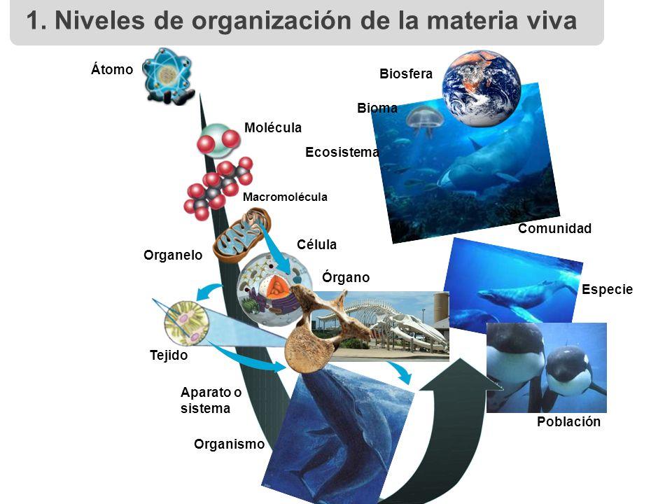 Niveles de organización de los seres vivos - ppt descargar