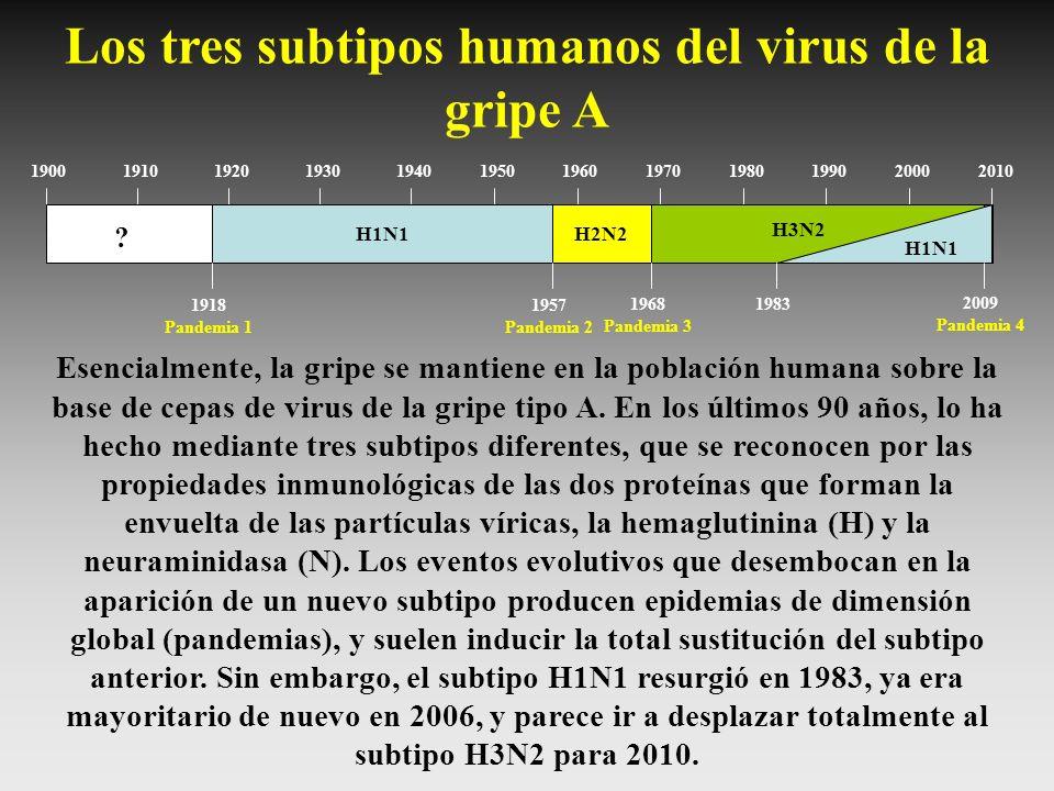 Los tres subtipos humanos del virus de la gripe A
