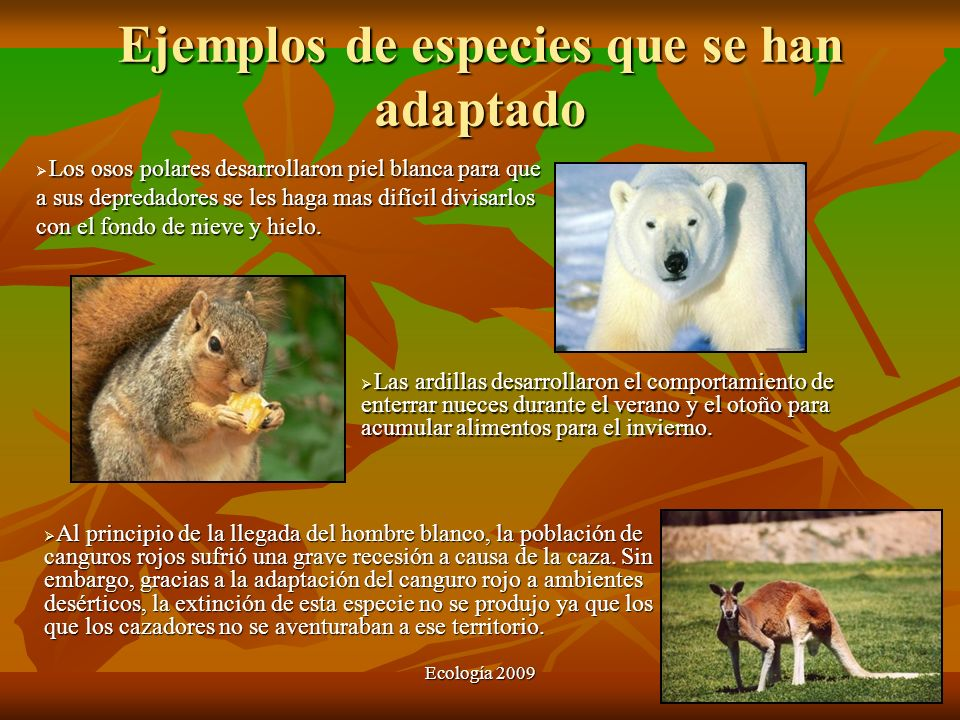 Ejemplos de especies que se han adaptado