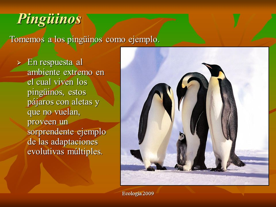 Pingüinos Tomemos a los pingüinos como ejemplo.