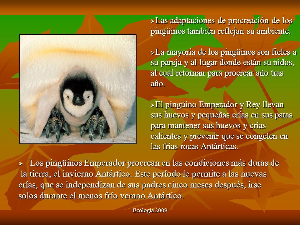 Los pingüinos Emperador procrean en las condiciones más duras de