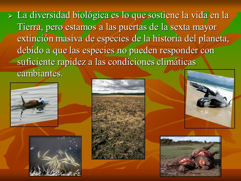 La diversidad biológica es lo que sostiene la vida en la Tierra, pero estamos a las puertas de la sexta mayor extinción masiva de especies de la historia del planeta, debido a que las especies no pueden responder con suficiente rapidez a las condiciones climáticas cambiantes.