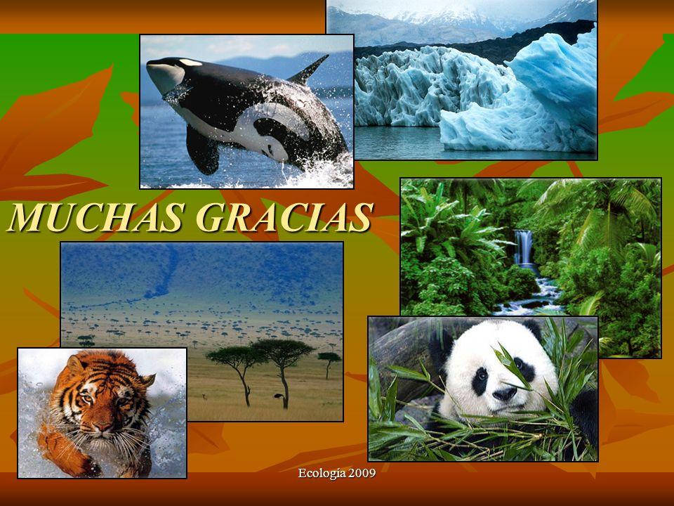 MUCHAS GRACIAS Ecología 2009
