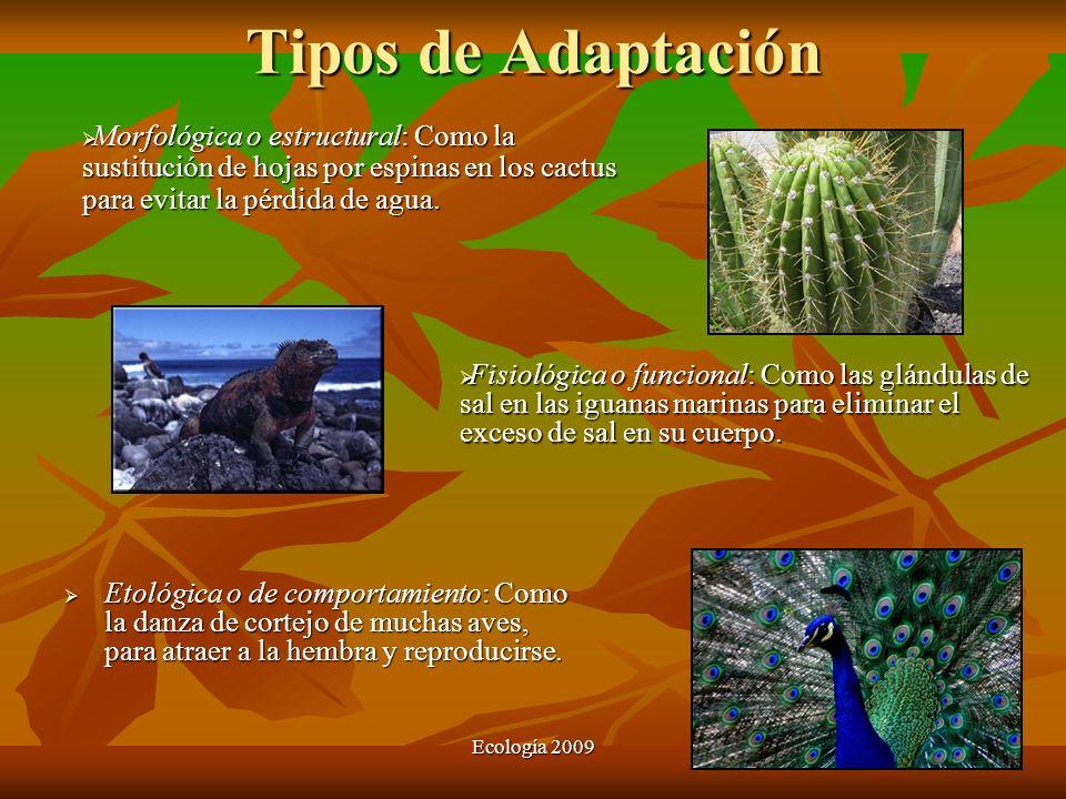 Tipos de AdaptaciónMorfológica o estructural: Como la sustitución de hojas por espinas en los cactus para evitar la pérdida de agua.