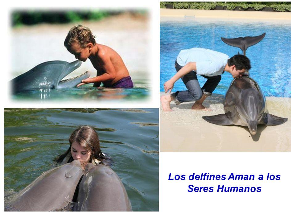 Los delfines Aman a los Seres Humanos
