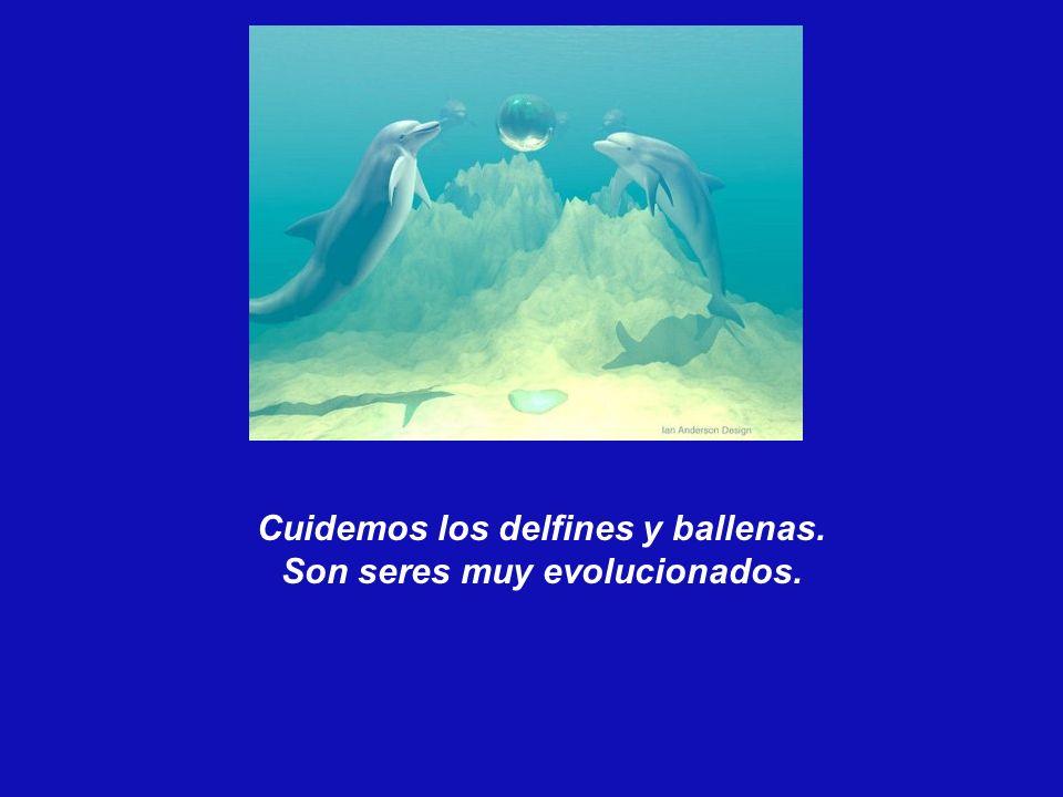 Cuidemos los delfines y ballenas. Son seres muy evolucionados.