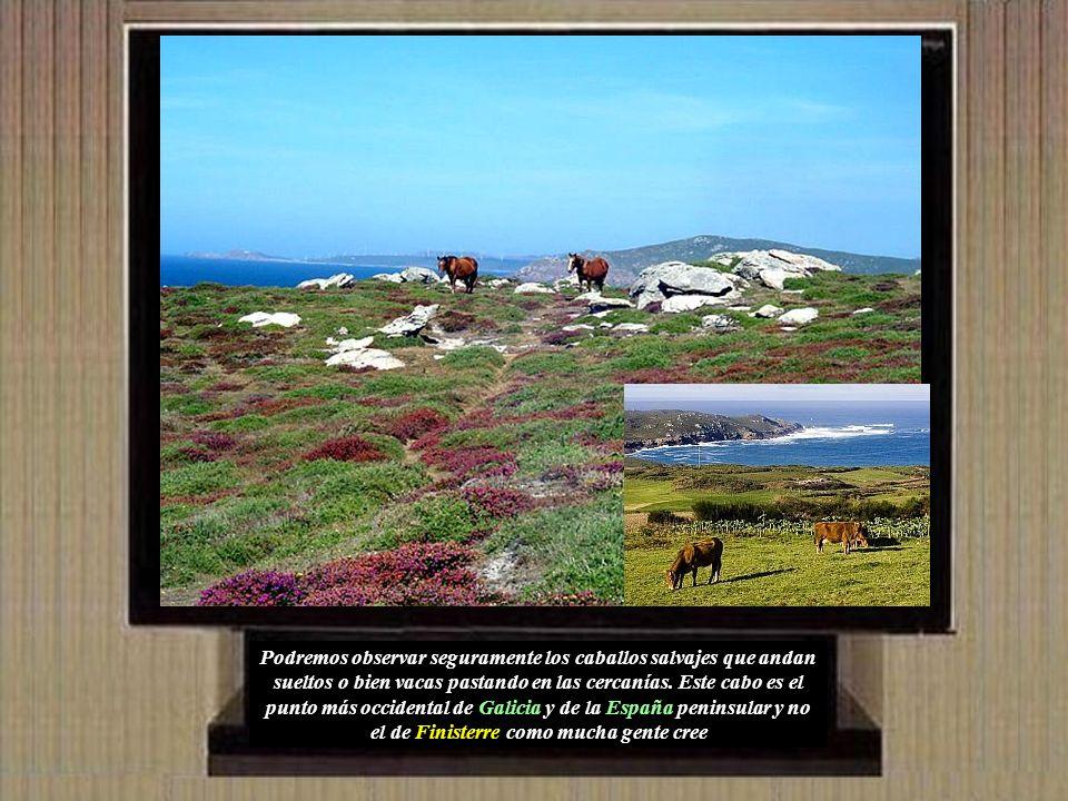 Podremos observar seguramente los caballos salvajes que andan sueltos o bien vacas pastando en las cercanías.