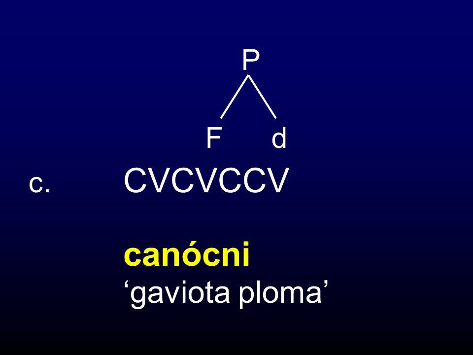 P F d c. CVCVCCV canócni 'gaviota ploma'