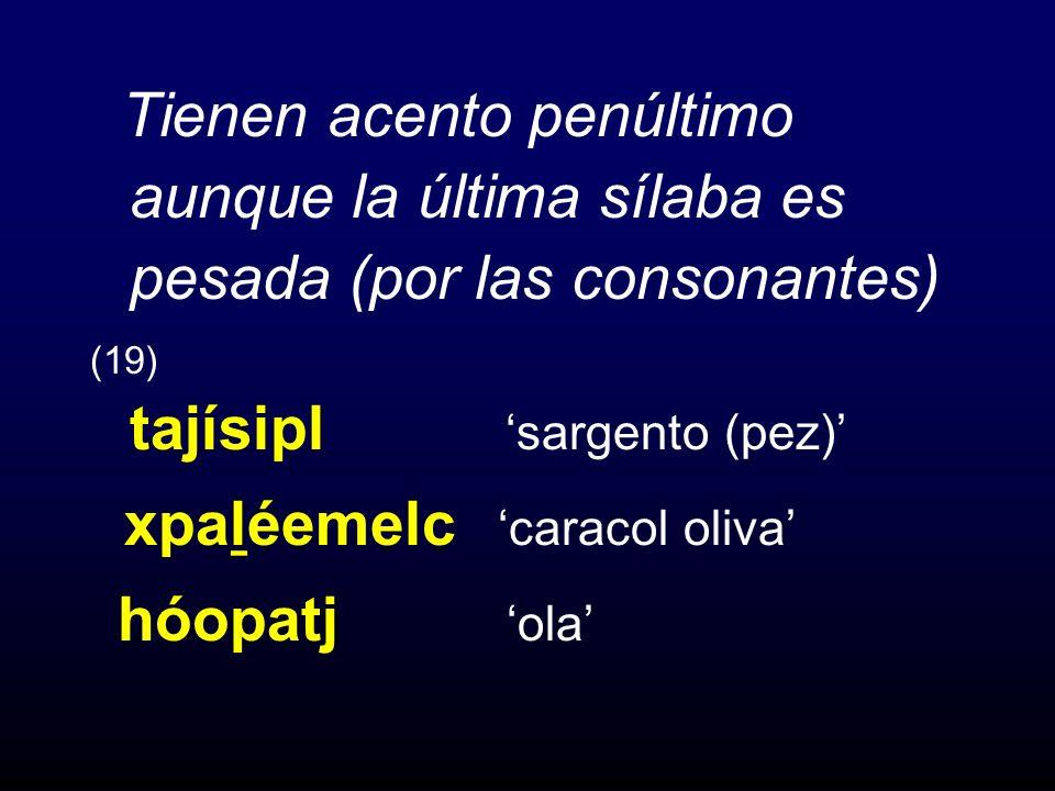 xpaḻéemelc 'caracol oliva'