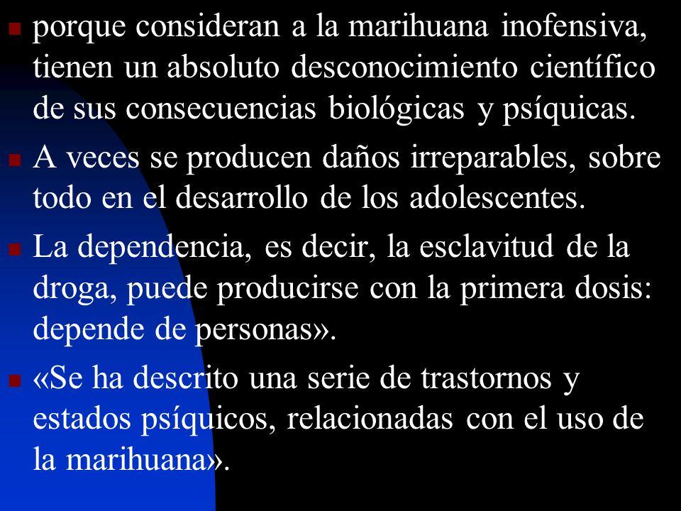 porque consideran a la marihuana inofensiva, tienen un absoluto desconocimiento científico de sus consecuencias biológicas y psíquicas.