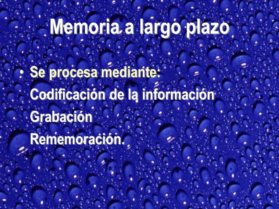 Memoria a largo plazo Se procesa mediante: