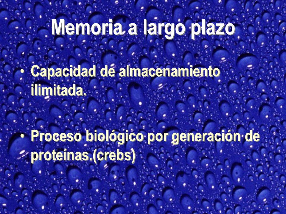 Memoria a largo plazo Capacidad de almacenamiento ilimitada.