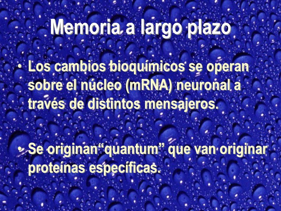 Memoria a largo plazo Los cambios bioquímicos se operan sobre el núcleo (mRNA) neuronal a través de distintos mensajeros.