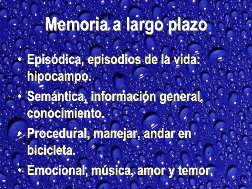 Memoria a largo plazo Episódica, episodios de la vida: hipocampo.
