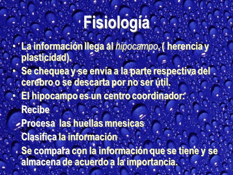 Fisiología La información llega al hipocampo, ( herencia y plasticidad).