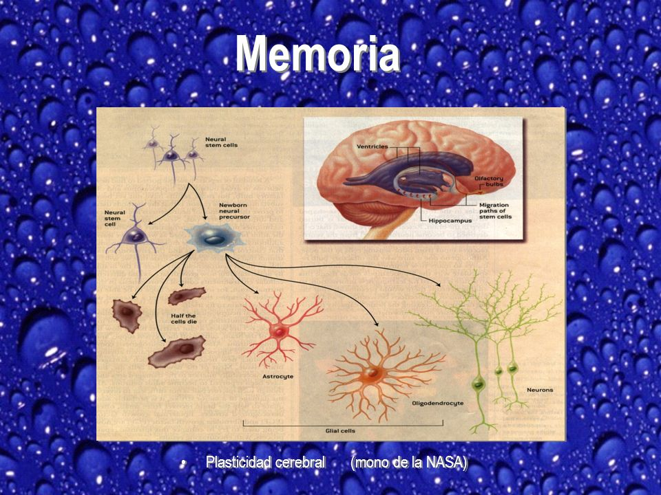 Memoria Plasticidad cerebral (mono de la NASA)