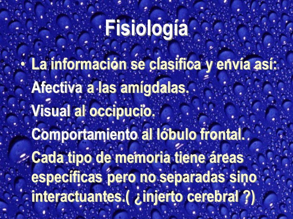 Fisiología La información se clasifica y envía así: